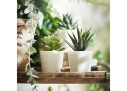 3 plantes artificielles en pot